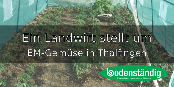 EM-Gemüse in Bio-Qualität – Ein Landwirt in Thalfingen stellt um
