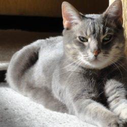 Katze - versorgt mit EM effektive Mikroorganismen