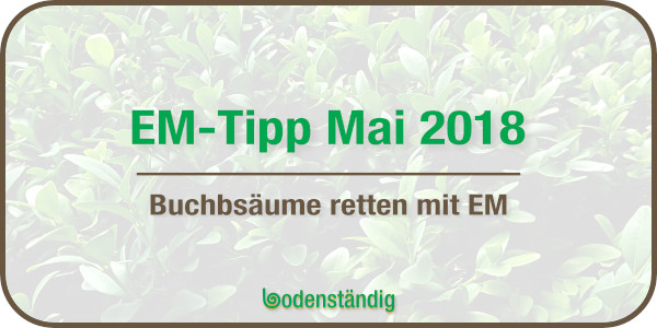 EM Tipp Mai 2018 - Buchsbäume mit EM retten