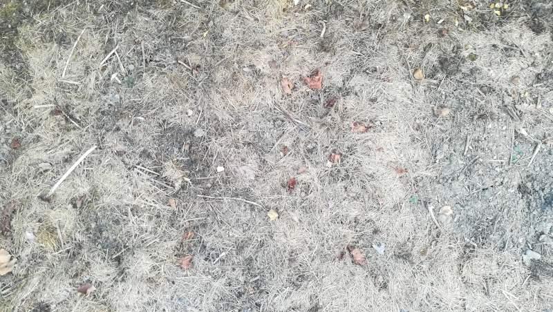 Bokashi-Mulch bei Dürre - Rasenschnitt. Keine Risse entstehen