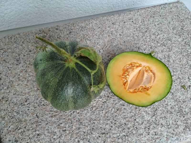 Heiße Sommer machen es möglich - Honigmelone anbauen im eigenen Garten
